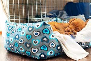 Schlafplätze für kleine Hunde