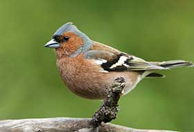 Vogelkäfig Einrichtung