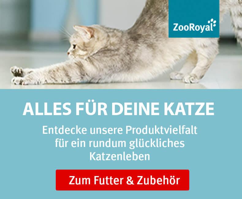 ZooRoyal Original für Katzen entdecken