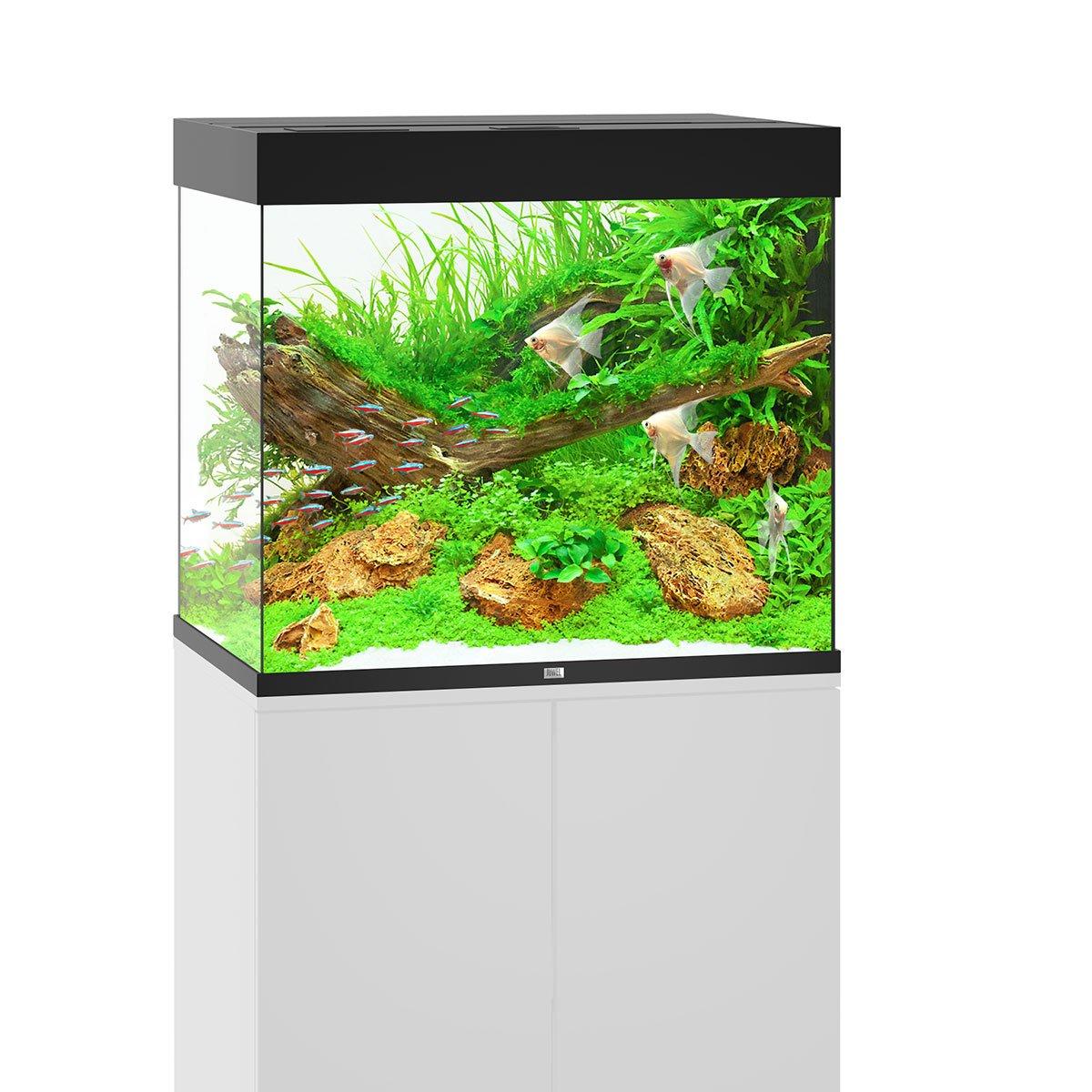 Juwel Lido 200 LED Komplett Aquarium ohne Schrank bei ZooRoyal