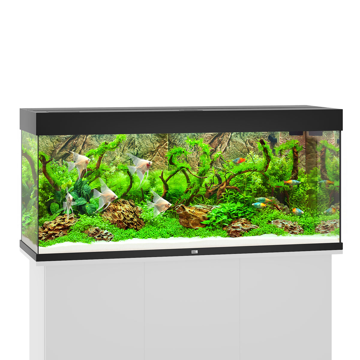 juwel rio 240 led komplett aquarium ohne schrank bei zooroyal. Black Bedroom Furniture Sets. Home Design Ideas