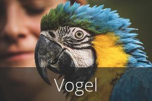 Vogel-Angebote