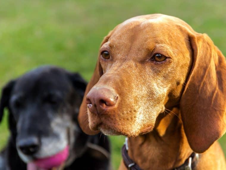 Sehvermögen von Hunden