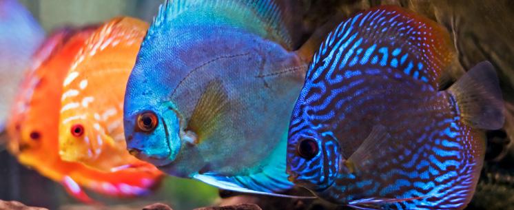 sera-aquaristik-image02