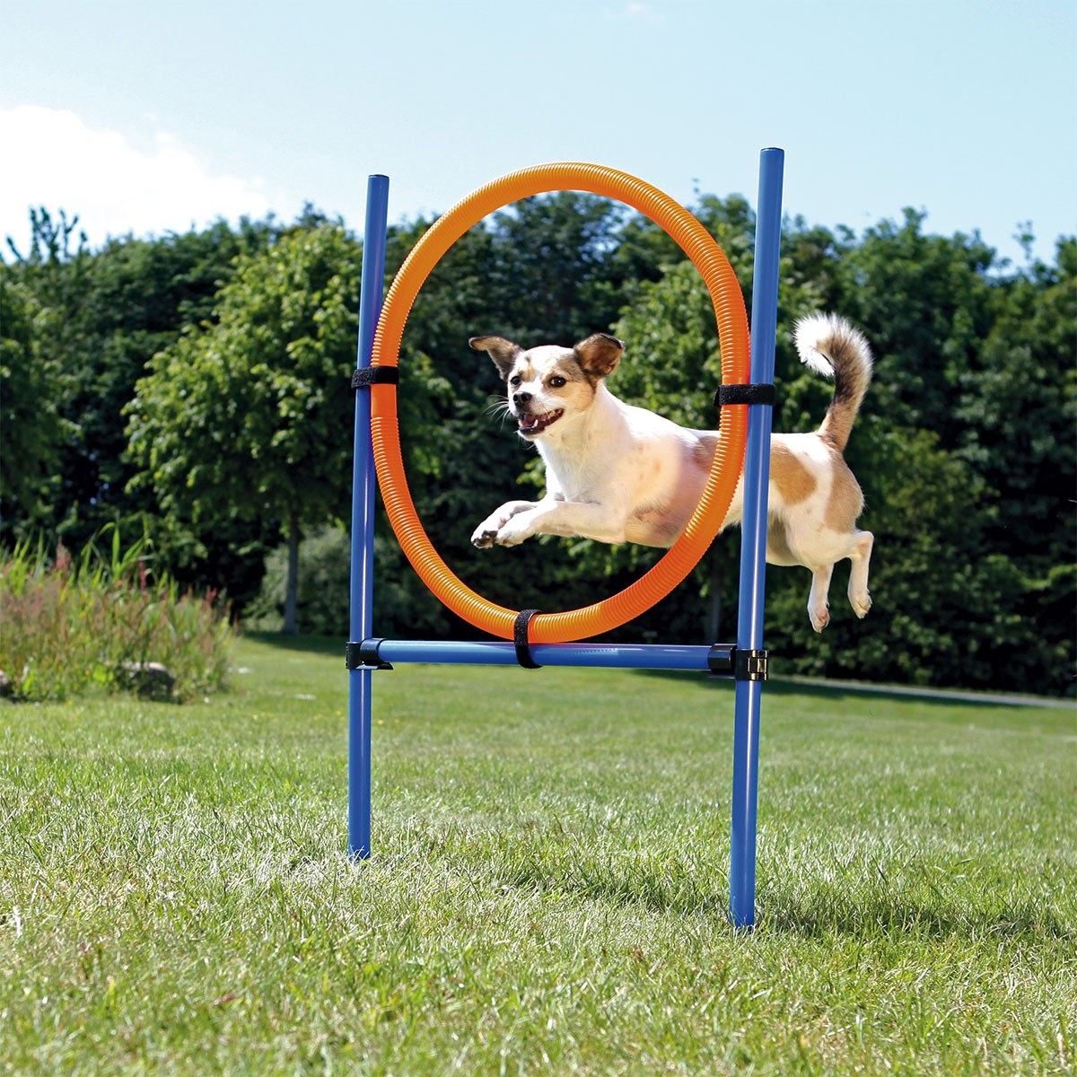 trixie dog activity agility ring g nstig kaufen bei zooroyal. Black Bedroom Furniture Sets. Home Design Ideas