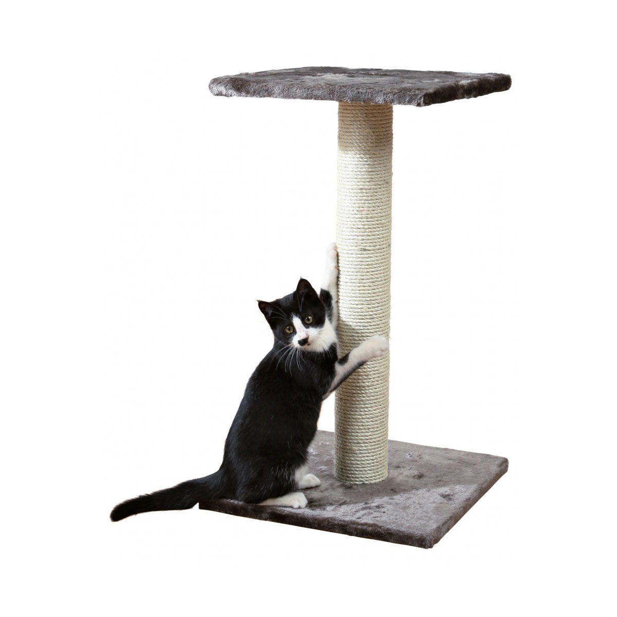 trixie kratzbaum espejo 69 cm g nstig kaufen bei zooroyal. Black Bedroom Furniture Sets. Home Design Ideas