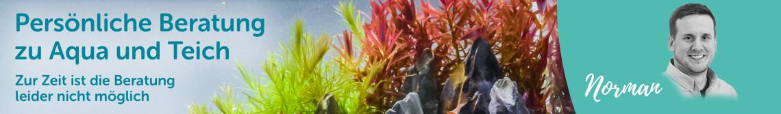 Persönliche Beratung zu Aquarien und Teichen