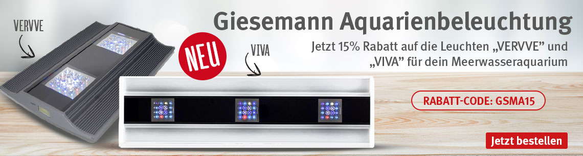 Giesemann 15% Rabatt