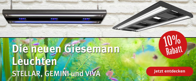 Neuheiten von Giesemann