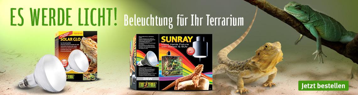 Beleuchtung für Ihr Terrarium