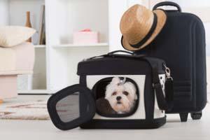 Hunde Transportboxen