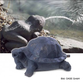 Oase Speier Schildkröte