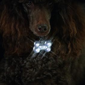 Karlie Hunde Sicherheitsblinker - Blinki Bone