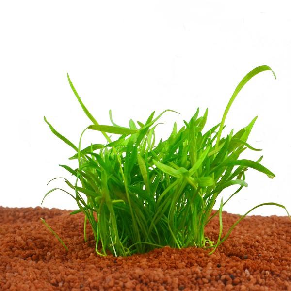 Planet Plants Aquarienpflanzenset
