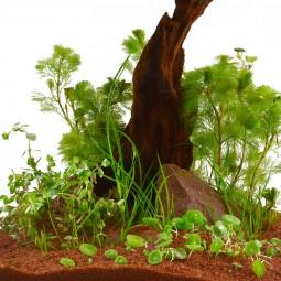 Planet Plants Nano Aquarienpflanzen Set