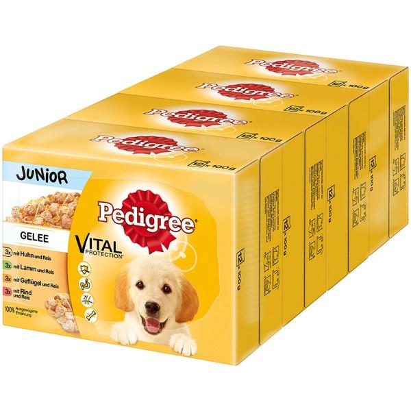 Pedigree Junior in Gelee 48x100g