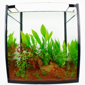 Planet Plants Aquarienpflanzenset