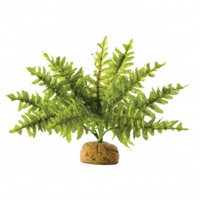 Exo Terra Terrarium Bodenpflanze - Boston Farn Small