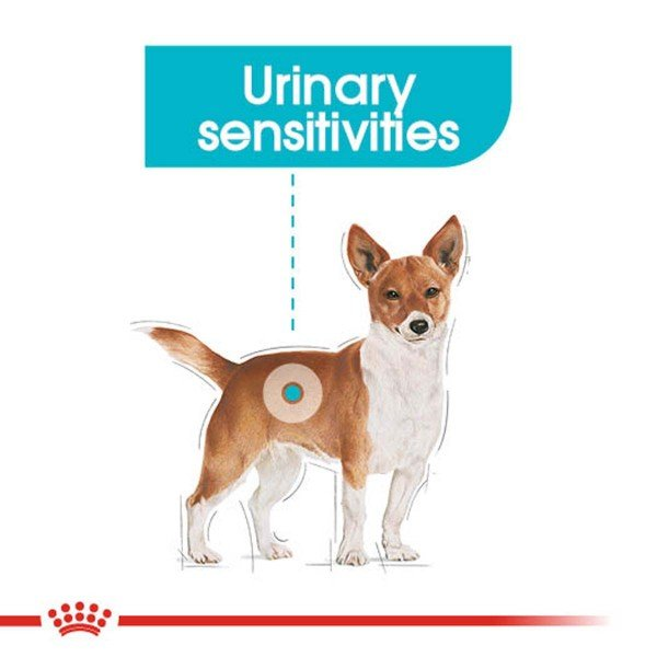 ROYAL CANIN Urinary Care Nassfutter für Hunde mit empfindlichen Harnwegen 12x85g