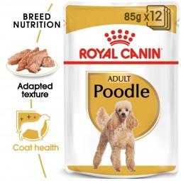 ROYAL CANIN Poodle Adult in Soße Hundefutter nass für Pudel 12x85g