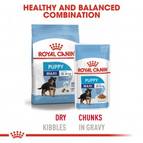 ROYAL CANIN Maxi Puppy 4kg +  Maxi Puppy in Soße 10x140g