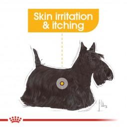 ROYAL CANIN DERMACOMFORT Nassfutter für Hunde mit empfindlicher Haut 12x85g
