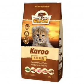 Wildcat Karoo Kitten