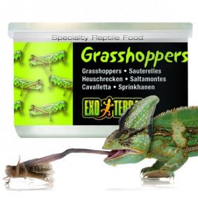Exo Terra Reptilienfutter Heuschrecken 34g