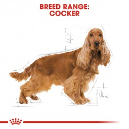 ROYAL CANIN Cocker Adult Hundefutter trocken