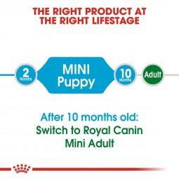ROYAL CANIN Mini Puppy 2kg + Mini Puppy in Soße 12x85g