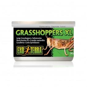 Exo Terra Aliment pour reptiles sauterelles XL 34 g