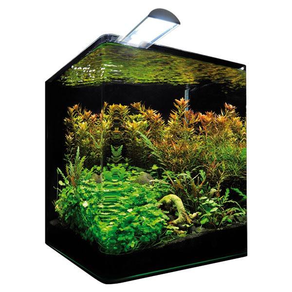 dennerle nanocube 30l aquarium g nstig kaufen bei zooroyal. Black Bedroom Furniture Sets. Home Design Ideas