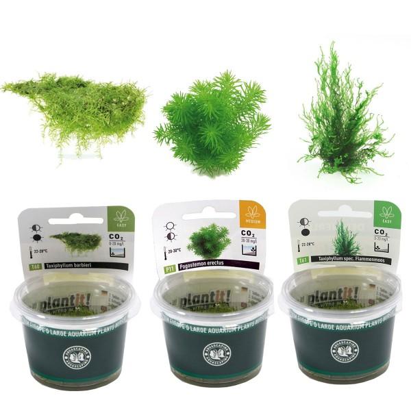 Dennerle Aquarienpflanzen-Set In-Vitro Aquarium...