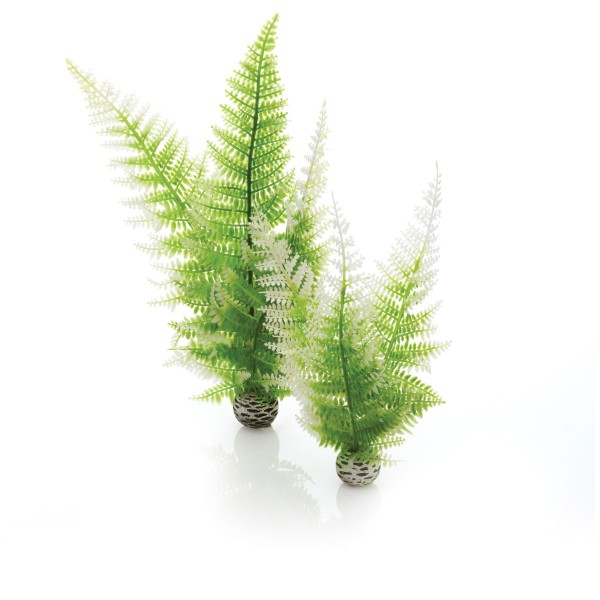 biOrb Aquariumpflanzen-Set Easy Plant Winterfarn M