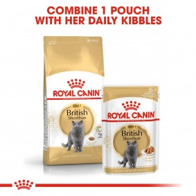 ROYAL CANIN ADULT British Shorthair 10kg + Nassfutter in Soße 48x85g
