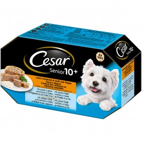 Cesar Senior 10+