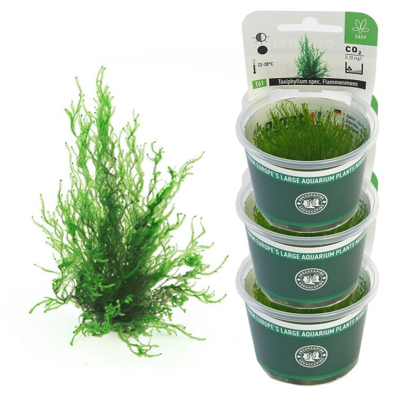 Dennerle Aquarienpflanzen Taxiphyllum spec. Fla...