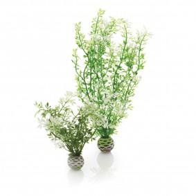 biOrb Aquariumpflanzen-Set Easy Plant Winterpflanzen M