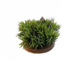 Plantes artificielles pour aquarium Green Moss - Mousse verte